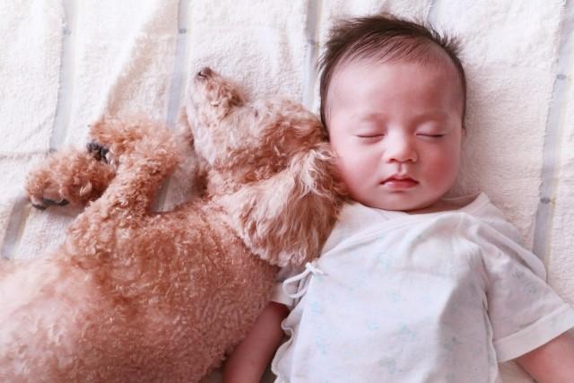.jpg - 子供と一緒に寝るベッド【年齢別】選び方&おすすめ5選。添い寝中のママ必見!
