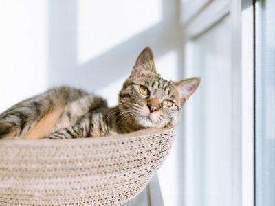 eric han WJ6fmN1D h0 unsplash 400x300 - 【オシャレっ!】猫が遊べる!おすすめ家具10選。ペットと暮らすインテリア